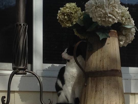 Peanut At Black Cat Vineyard